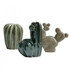 HAY - Cacti